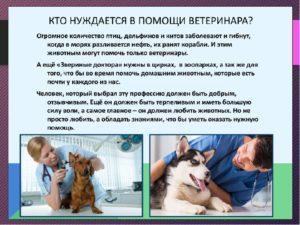 Сообщение о своей будущей профессии ветеринар. Профессия — ветеринар. Плюсы и минусы профессии ветеринар