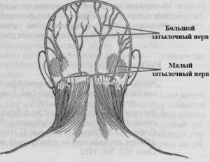 Воспаление нервных окончаний на спине. Затылочный нерв, воспаление: симптомы и лечение