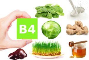 Витамин В4 (холин) для чего он нужен организму. Витамин B4 (Холин)