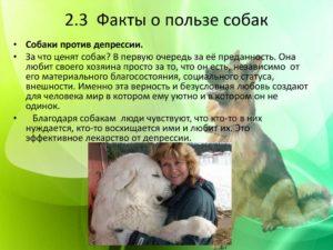 Мультицвет чем полезно собаку. Польза от собаки для человека. Они могут определить рак