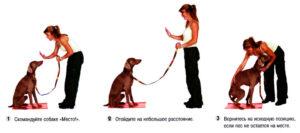 Как научить собаку команде голос. Как научить овчарку подавать голос по команде Как научить пса команде голос