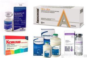 Эффективные антибиотики для кошек. Дозировки, побочные эффекты. Какие антибиотики можно давать коту? Цефалоспорины для кошек