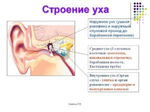 Внутренний отит уха: симптомы, лечение. Каково строение внутреннего уха человека и его функции