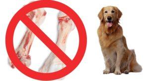 Какие кости давать собаке вареные или сырые. Можно ли давать кости собаке? Отвечаем подробно! Кому нельзя давать кости