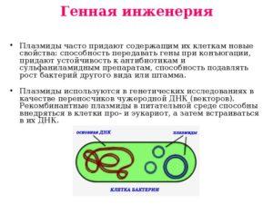 Использование в генной инженерии. Плазмиды бактерий, их функции и свойства. Использование плазмид в генной инженерии