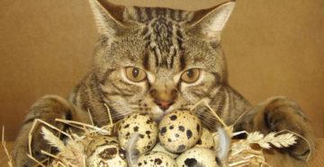 Можно ли кошкам есть яйца. Можно ли давать котенку вареное яйцо: плюсы и минусы этого продукта. Как давать кошке яйца