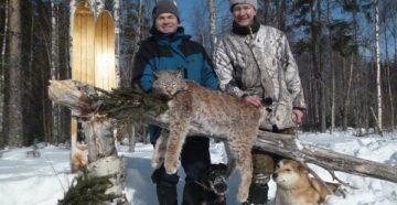 Как ставить капканы на рысь зимой. Охота на рысь в зимний период. Повадки и как охотится рысь