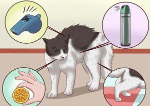 Кошка метит углы что делать. Кошка метит территорию: что делать? Что такое метки и кто их оставляет