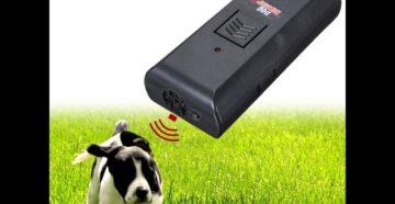 Чем отпугнуть собаку на улице. Как отвадить собак от участка: способы и советы. Лучшие карманные ультразвуковые отпугиватели собак