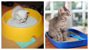 Как приучить котенка к ласке и рукам. Как приучить котенка к рукам: простые и полезные советы. Как ухаживать за уличной кошкой или котенком