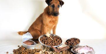 Собака отказывается от сухого корма: что делать? Собака плохо ест сухой корм