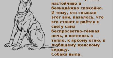 Что надо говорить когда воют собаки. Воет собака дома: к чему это? Приметы почему воет собака