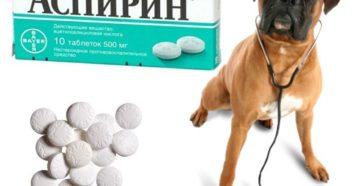 Можно ли применять аспирин для собак? Главные меры предосторожности. Можно ли давать собаке аспирин Можно ли дать собаке аспирин от температуры