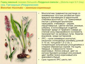 Змеевик растение лечебные свойства. Змеевик (горец змеиный). Корневища змеевика. Использование в гомеопатии