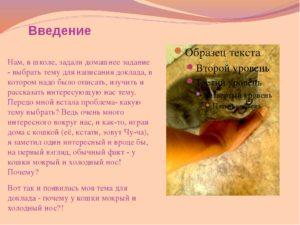 Почему у котов мокрый нос: что это значит? Почему у кошек мокрый нос Влажный нос у кота