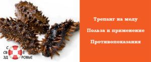 Морской огурец с медом как принимать. Трепанг на меду: польза, рецепты, показания к применению. ЛОР - заболевания