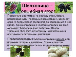 Шелковица полезные и лечебные свойства, противопоказания. Листья, плоды и корень шелковицы: полезные свойства и противопоказания