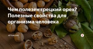 Грецкий орех – полезные свойства и вред. Применение в кулинарии. Грецкие орехи со сметаной: польза для мужчин