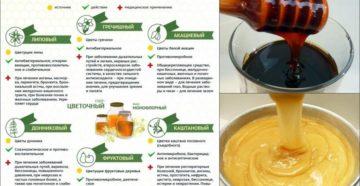 Какой мед считается самым лучшим. Какой мед самый полезный? Разбираемся в сортах меда и его полезных свойствах