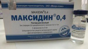 Максидин для кошек: инструкция по применению. Максидин для кошек — инструкция по применению Фоспренил максидин дозировка для котят