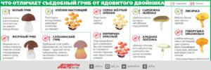 Отравление грибами лечение дома. Какие грибы являются самыми ядовитыми для человека? Лечение в стационаре.