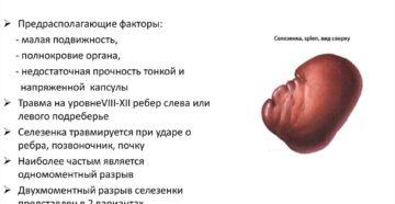 Ушиб селезенки: причины возникновения, симптомы и способы лечения. Повреждения селезенки
