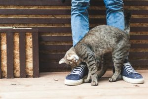 Почему кошка трется о ноги: рассказываем интересно и подробно. Почему коты часто трутся о ноги человека? Почему кошка трется мордой