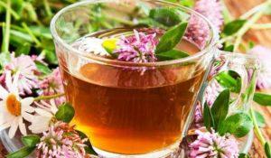 Все о красном клевере. Чай из клевера с мятой. Рецепты для лечения