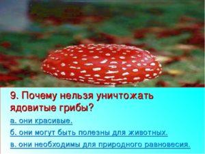 Почему нельзя ломать ядовитые грибы в лесу. Почему нельзя уничтожать ядовитые грибы