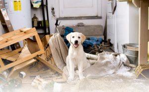 Простое обучение собаки оставаться одной дома и не скулить. Собака боится оставаться дома одна Собака не сидит дома одна