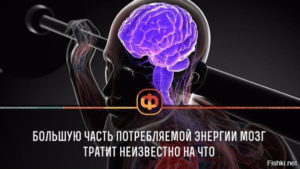 Чем занят мозг, когда он ничем не занят? Потребление энергии мозгом