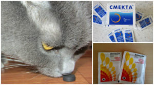 Можно ли давать активированный уголь кошкам? Как лечить кошку от отравления? Советы ветеринара Как давать уголь кошке