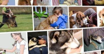 Как успокоить собаку если она лает. Как успокоить собаку? Советы и рекомендации. Объекты агрессивности: члены семьи, чужие, другие животные