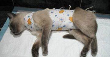 Когда можно кормить кошку после наркоза. Чем кормить кошку после операции: важные особенности восстановления. Послеоперационный период у кота после уретростомии