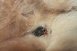 Выделения у кошки перед родами, что считать нормой, а что патологией
