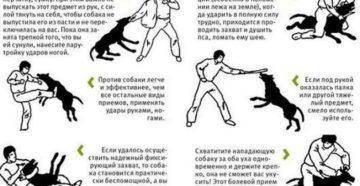 Что будет если часто бить собаку. Можно и нужно ли бить собаку? Почему нельзя бить собаку